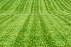 Green Grass Patterns Royalty Free Stock Image