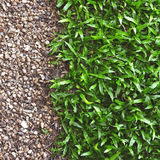 Green grass with pebbles Royalty Free Stock Image