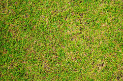 Green grass photo background. Green grass soccer field background. Royalty Free Stock Photos