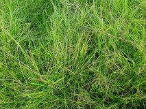 Green grass photographed in Fouriesburg, South Africa