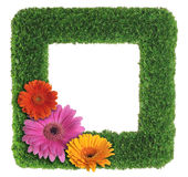 Green grass picture frame with flowers Royalty Free Stock Images