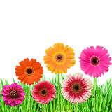 Green grass with pink flowers royalty free stock photos