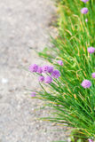 Green grass and pink flowers on side of road Royalty Free Stock Image