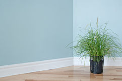 Green grass plant decorating a room Stock Photography