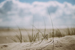 Green Grass Plant on the Sand during Cloudy Weather Royalty Free Stock Image