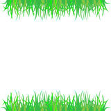 Green grass. Plant which has no odrevesnevayushchikh of stalks. Herbs have root, a stalk, leaves and flower part. And height of herbs is from several centimeters Royalty Free Stock Photography