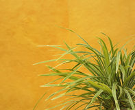 Green grass plant on yellow. Green plant leaves growing against yellow surface royalty free stock photo