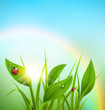 Green grass, plantain and ladybugs with sunrise and rainbow on b. Lue sky. Floral nature spring background Royalty Free Stock Photo