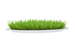 Green grass on a plate Stock Photography