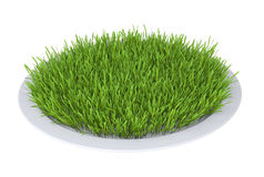 Green grass on a plate Stock Images