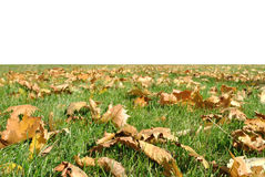 The green grass plot with yellow autumnal leaves Royalty Free Stock Photos