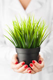 Green grass pot in hands Stock Photo