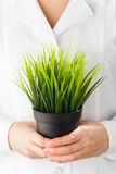 Green grass pot in hands Royalty Free Stock Image