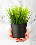 Green grass pot in hands Stock Photography