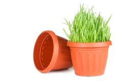 Green grass in a pot isolated on a white Royalty Free Stock Photos