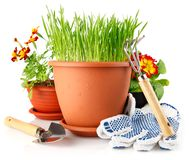 Green grass in the pot with red flowers Stock Image