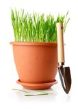 Green grass in the pot with shovel tool Stock Image
