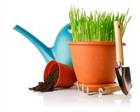 Green grass in the pot with shovel tool Stock Images