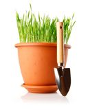 Green grass in the pot with shovel tool Stock Photos