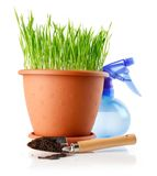 Green grass in the pot with soil in shovel Royalty Free Stock Photos