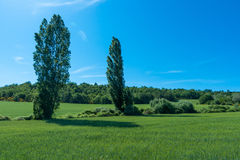 Green Grass. In Provence, south France Stock Photography