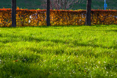 Green grass in public park use as background Stock Images