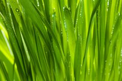 Green grass after rain Stock Photography