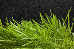 Green grass and rain. Green grass on a black background Stock Photography