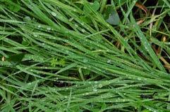 Green grass rain Stock Photo