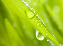 Green grass with rain drops Stock Image