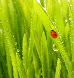 Green grass with rain drops Stock Photography