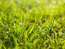 Green grass with rain drops spring background. stock images