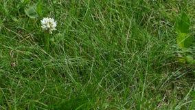 Green grass after rain summer. Green grass after rain 2019 summer stock footage