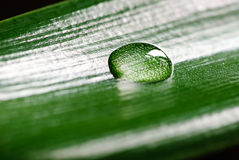 Green grass with raindrops background Stock Photos