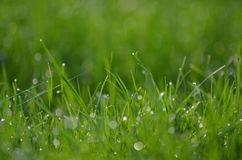 Green grass with raindrops Stock Photography