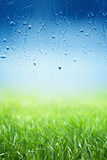 Green grass, rainy day Royalty Free Stock Image