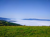 Green grass ranch with a group of cows pasturing over the clouds stock photos