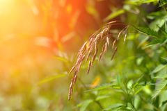 Green grass in the rays of the setting sun Stock Photos