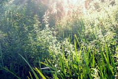 Green grass in the rays of the sun. In the morning Stock Images
