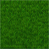 Green grass realistic textured background isolate white background, vector illustration Stock Image