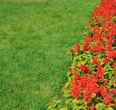 Green grass and red flowers Royalty Free Stock Image