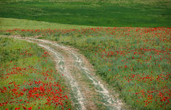 Green grass and red flowers Stock Images
