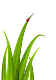 Green grass with red ladybug Royalty Free Stock Photography