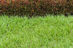 Green grass and red plant Royalty Free Stock Image