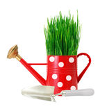 Green grass in red polka dot watering can and shovel isolated Stock Photography