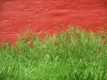 Green grass - red wall. Wild growing green grass in front of bright red wall. Colorful. Copy-space stock photo