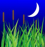 Green grass  with reeds and moon Stock Images