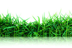 Green grass reflect on floor Royalty Free Stock Images