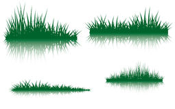 Green grass with the reflection Royalty Free Stock Image