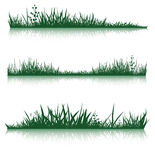 Green grass with reflection Stock Photo